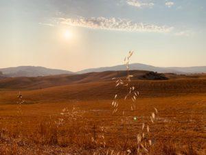 Abitare Poeticamente il Mondo | Incontro con Massimo Angelini sul tema INABITARE LA BELLEZZA